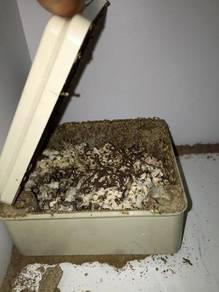 Pest Control DIY Sistem Umpan Anai-Anai