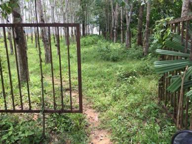 Kebun Getah Dalam Kampung Untuk Dijual - Sesuai Untuk Buat Rumah/Noreh