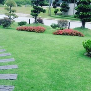 Grass(tanam rumput)potong pokok/gardening,landscap