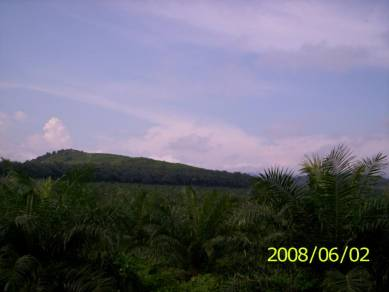 Palm Oil Estate For Sale