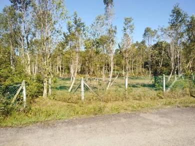 Pokok Gaharu di Nusa Dusun