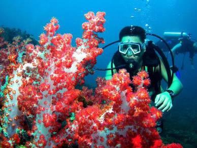 Satang Island Fun Dive (Day Trip)