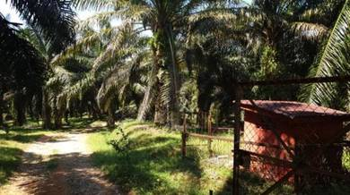 50 acres agriculture land for sell, , Rembau Serombok