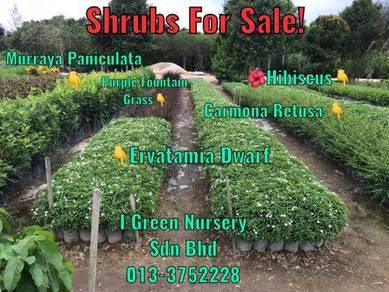 Landscape Project Plants - Shrubs