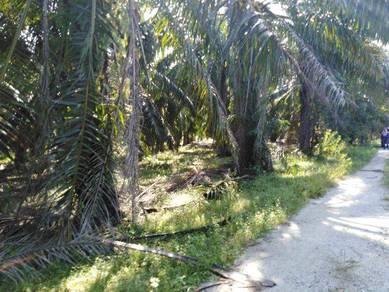 Tanah Pertanian di Tanjong Agas