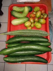 Self plant 100% Organic Vegetables and Fruits