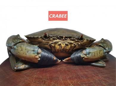 Ketam Nipah / Mud Crab (2pcs)