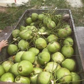 Kelapa Pandan Muda Ori Mai Kedah Bak Hang