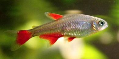 Aquarium Acrylic Fish Tank 18 Liters