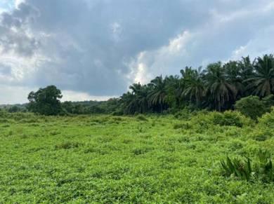 Agricultural land Port Dickson Mukim Linggi