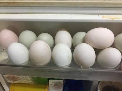 Jualan Telur Itik