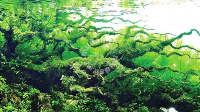 Moss for aquascape and aquarium - Pets for sale in Tanjung ...