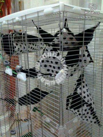 cage set for sugar glider