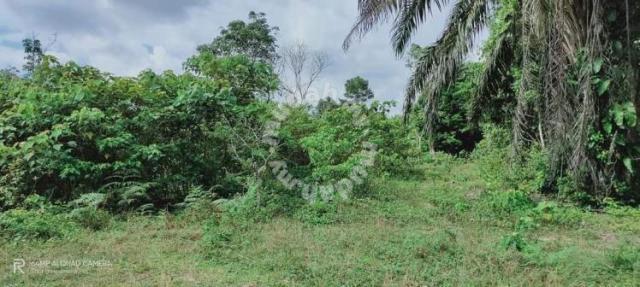 [MURAH & HOT LOCATION] Tanah Pertanian Kg Pandan 1 Kuantan