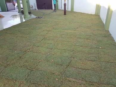 Laman Rumah Tanam Rumput Pokok Japan artificial