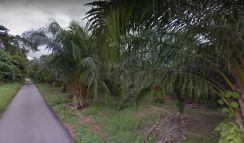 Freehold Oil Palm Land at Taboh Naning, Tampin, Alor Gajah, Melaka