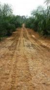 Oil Palm Plantation at Sarawak