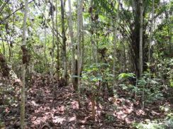 Ulu Tiram Residential Land and Agricultural Land For Sale