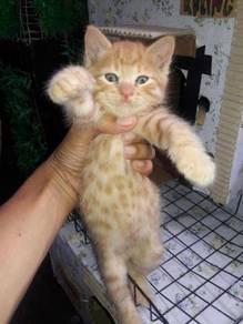 Anak kucing utk dlepaskan