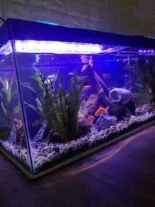 Aquarium and aquascape