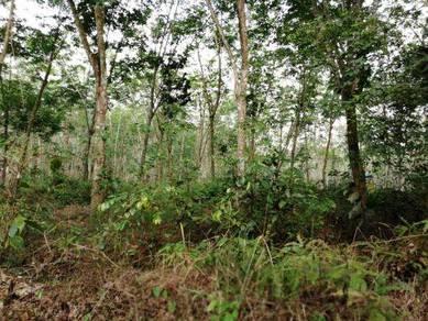 Tanah Kebun Getah di Chin-Chin Jasin
