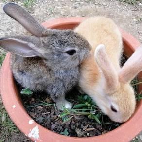 Ordinary rabbit baby