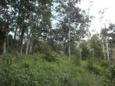 RUBBER TREE 11.3 acres at RASA