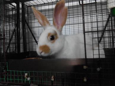 Boarding for Rabbits Hotel Arnab