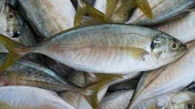 Pemborong Ikan