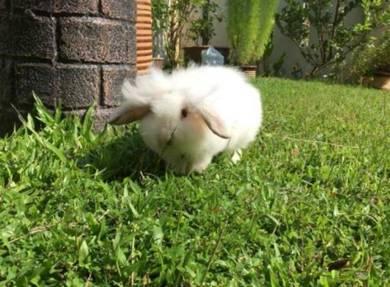Fuzzy Lop - Earlop
