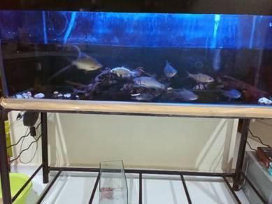 Aquarium complete set 4x1.8x1.8