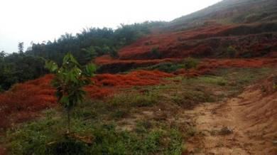 Agriculture land at Linggi tangkau