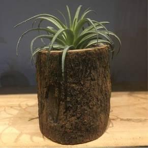 Mini Wooden Pot