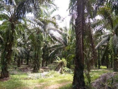 Palm Oil Agriculture Land, 18 Acres, Jelebu, Negeri Sembilan