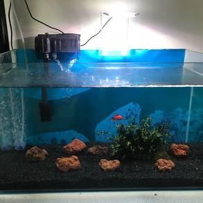 Curve Aquarium Full set