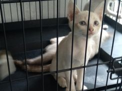 Kitten / Anak kucing for adoption + free gifts