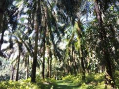 Freehold Oil Palm Land at Lendu, Kelemak, Alor Gajah, Melaka