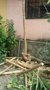 Potong Pokok Rendang