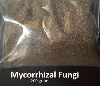 Mycorrhizal Fungi (root booster)
