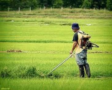 Servis potong rumput