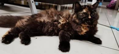 Cat DLH