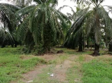 Tanah 1.25 ekar freehold di Jeram, Kuala Selangor