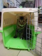 pet carrier For sell