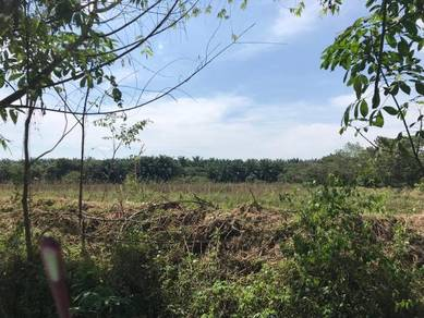 Agriculture land in Merbok for sale