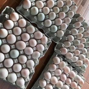 Telur Itik Fresh & Asin