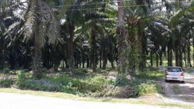 Palm Oil Land Freehold - 7.2 Acres Kuala Krau Main Road