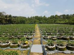 5 Acres Agricultural Land To Let, Semenyih