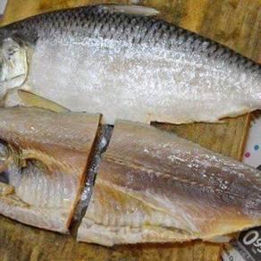 Ikan terubuk masin ori sarawak