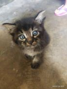 Anak kucing dlh