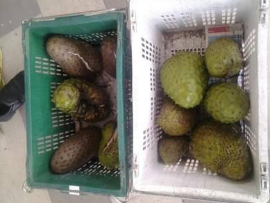 Buah segar durian belanda dan isi pek 1kg